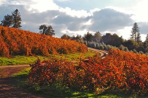color ilgioiellowinery autumnviewfrompatio afterautumnharvest