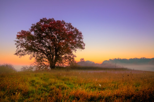 morning autumn light wallpaper usa mist tree fall nature field fog wisconsin sunrise landscape outdoors dawn photo october scenery image belleville horizon picture american northamerica canonef1740mmf4lusm iceagetrail 2011 canoneos5d danecounty phtotography brooklynwildlifearea lorenzemlicka