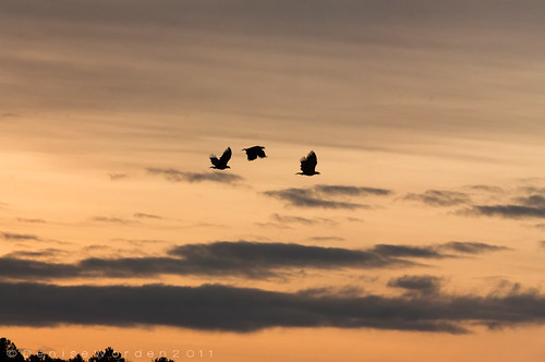 nature sunrise canon landscape wings flight baldeagles jordanlake juveniles 450d imaginefotocom