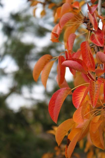 An Autumnal Cascade