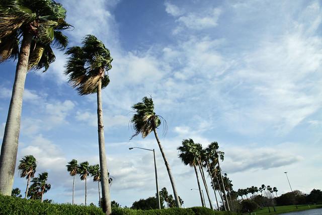 wide angle palm trees