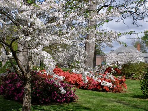 Hampton Park, Spring View
