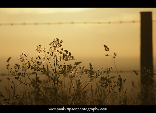 uk sunset england sun grass silhouette weeds barbedwire backlit fencepost sunsetphotos paulsimpsonphotography ringexcellence dblringexcellence tplringexcellence