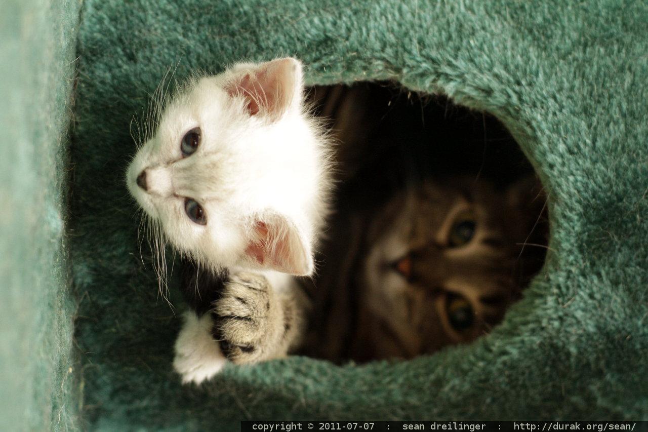Special Kitty Indoor Cat Food