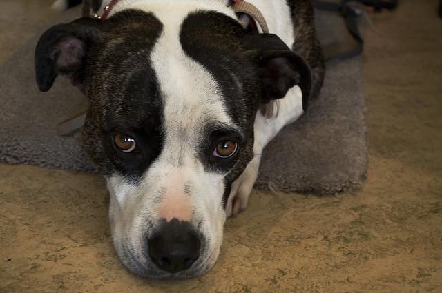 Rescue Dogs Essex Chelmsford