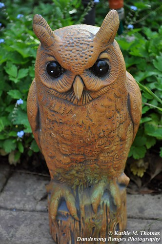 Weird Owl Yankovic