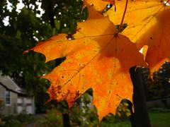 Turning leaf.
