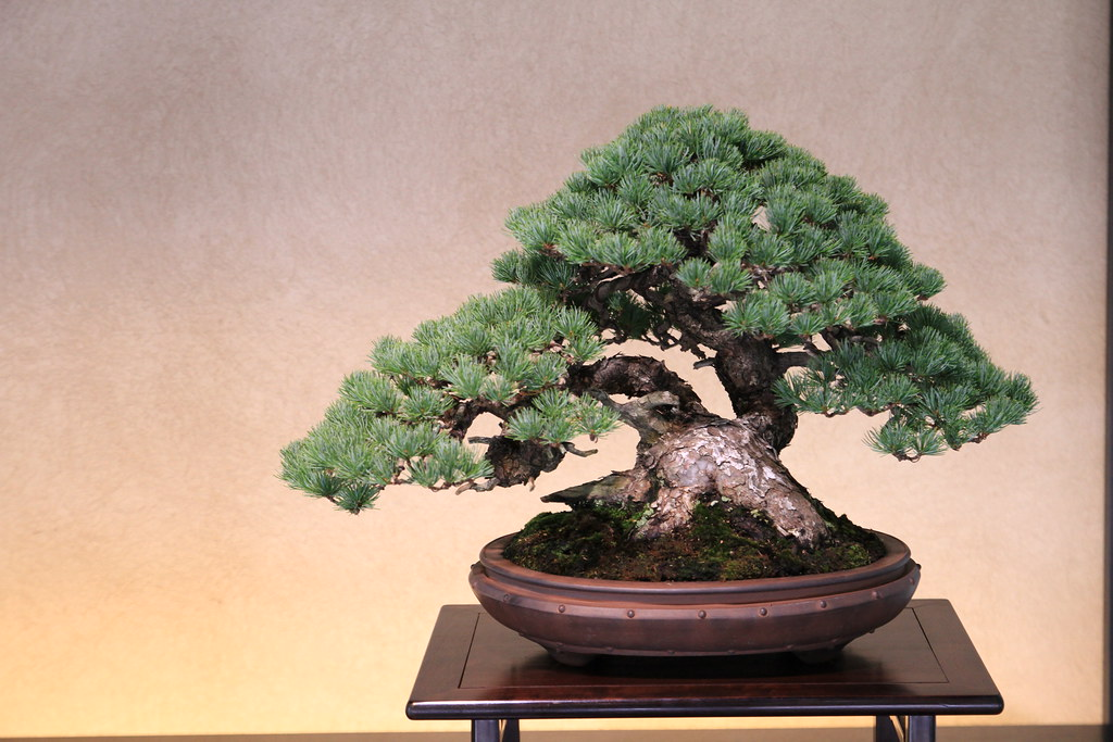 """The Omiya Bonsai Art Museum"" You witness the last bonsai !? in JAPAN"