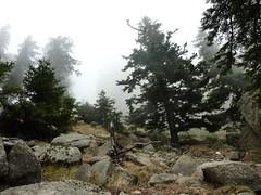 Trace vers Bocca Cilindinu : montée dans la forêt