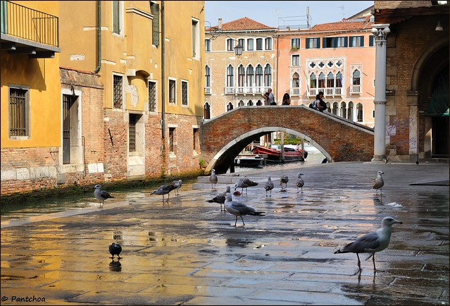 Venice : The gulls meal