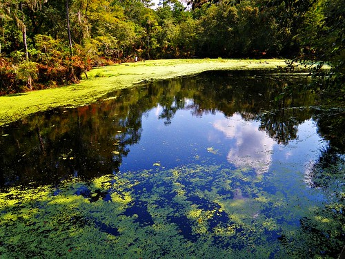 O'Leno State Park: Sante Fe River Sink