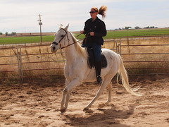 A and Silver, canter/gallop