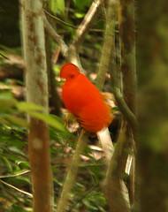 Guyana-0596