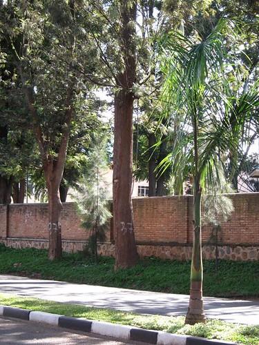 trees streets kigali rwanda by Danalynn C