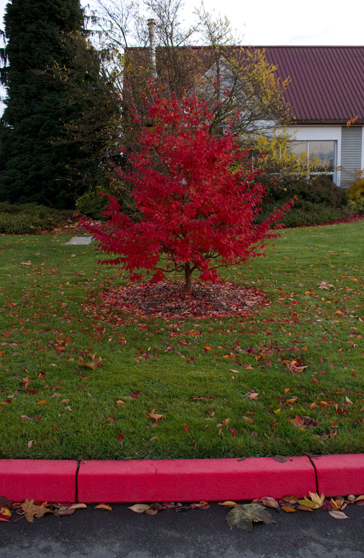 Red Tree.