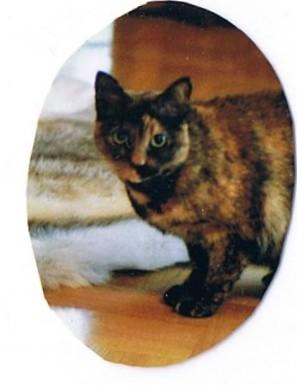 Suloinen Tiina-kissa
