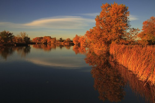 lake fall leaves reflections landscape colorado lakescape rockymountainarsenal