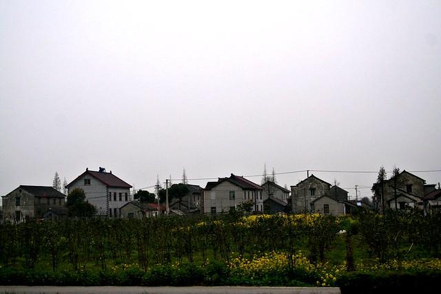 上海高速路旁的油菜花田