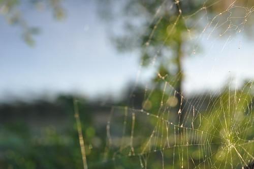 stark spindelnät onceamonth