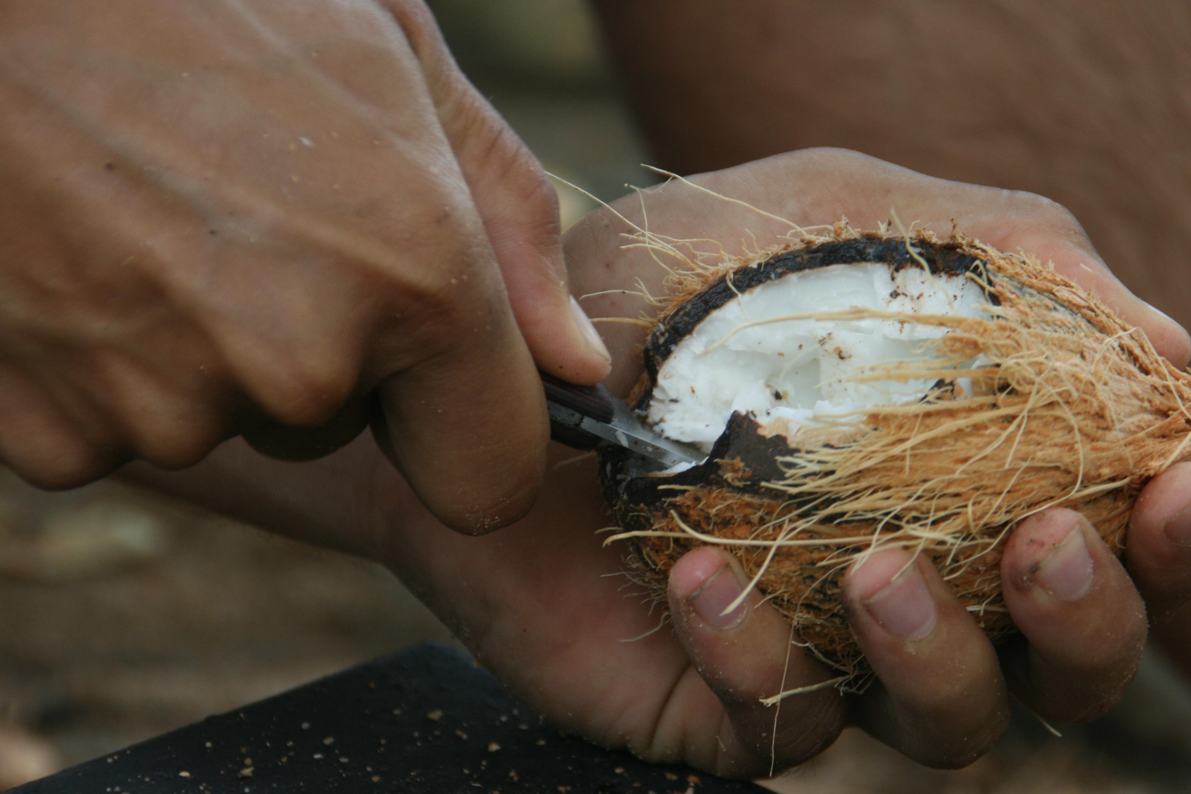 Com obrir i menjar-se un coco 11