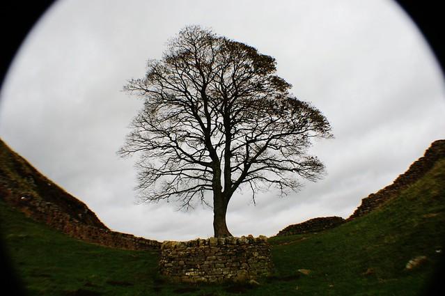 Sycamore Gap, Hadrian's Wall