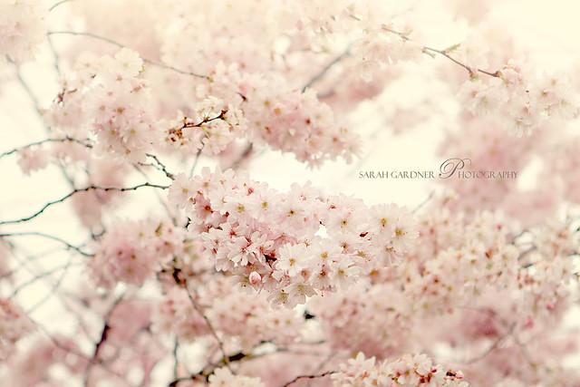 Floral_blog_017
