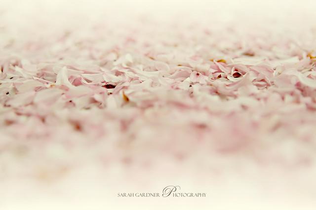 Floral_blog_018