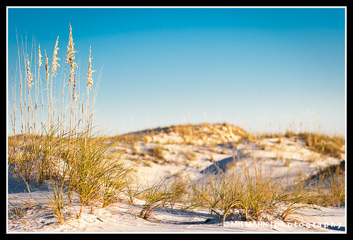morning sea white beach field grass sunrise sand dof florida dunes dune fl destin oats depth edgewater oat destindunes