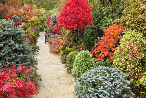 Pathway through our  autumn garden