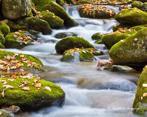 usa fall sc nature water leaves river outdoors moss rocks stream flowing gatlinburg