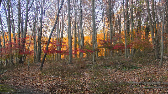 Red Wood Forest by flickr user thirdworld
