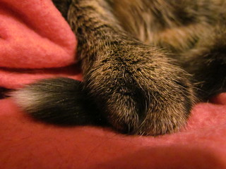 Gizmo paw and tail