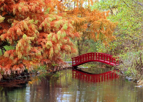 Japanese Bridge at Cranbrook #2