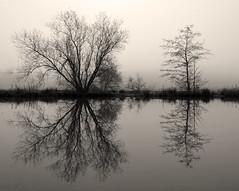 Misty mill pond - XI (323)