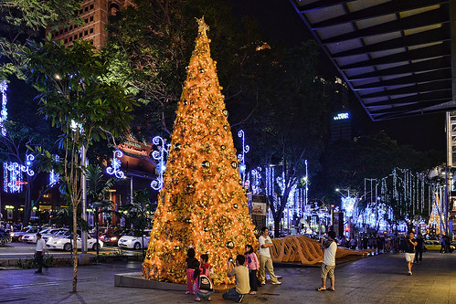 Christmas Blooms in Singapore