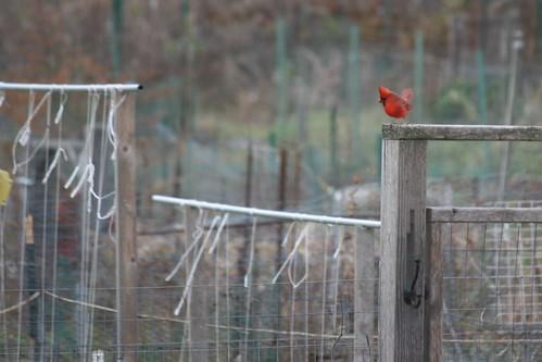 garden birds 002