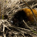 11-20-11: Fuzzy Caterpillar Hiking the AT