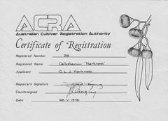 Gawler hybrid bottlebrush certificate. Issued on 28th May 1978.