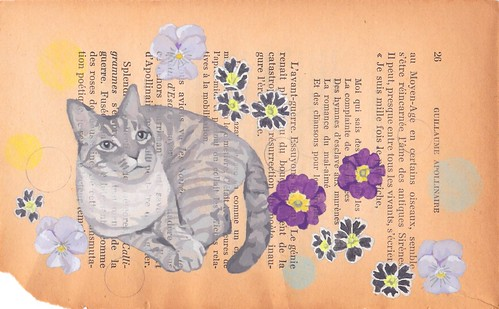 flower and cat :)