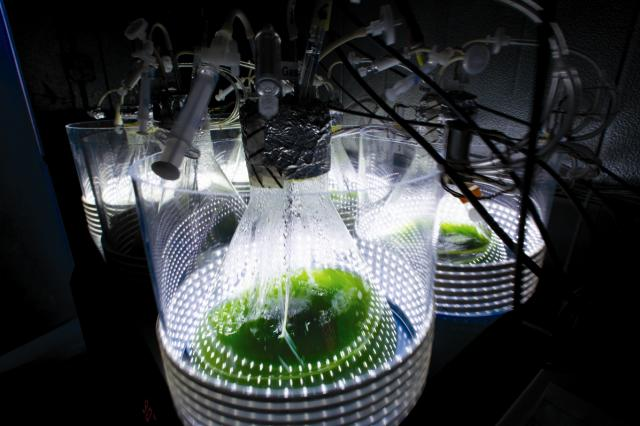 A closed photobioreactor system is essentially a series of plas- tic or glass containers for water and algae. Proponents of such bioreactors (compared to open ponds) say the growth environment can be more easily controlled; they prevent evaporation; and light penetrates through all sides of the container, which increases cell density. However, bioreactors suffer high materials and energy costs as well as mixing and gas-exchange inefficiencies; therefore scalability remains problematic.