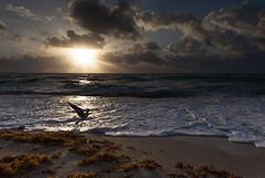 Sunny Isles Sunrise | 120321-9018-jikatu