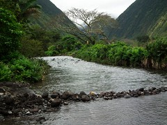 Hawaii Big Island Kona Hilo 212