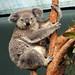 Sydney Wildlife World, Sydney