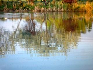 Beach's Pond