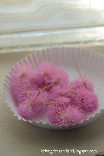 Bunga Puteri Malu