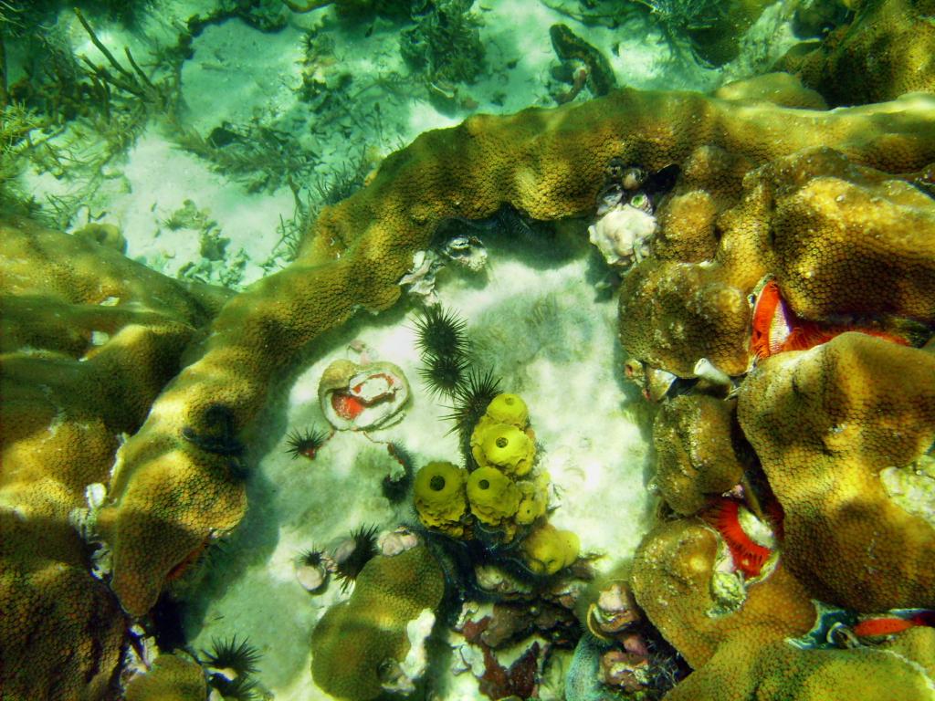 Submarinismo en Costa Rica