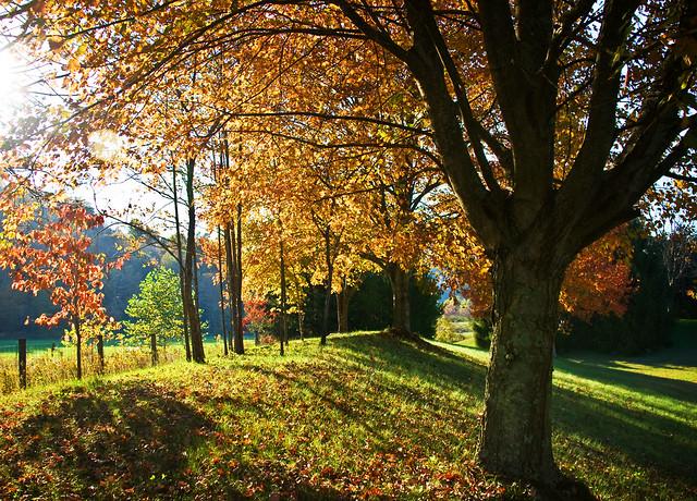 Crispness of fall