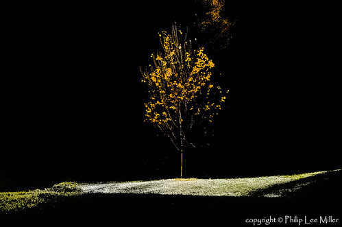 autumn nature landscapes vermont frost fallfoliage mapletrees pomfret earlymorningsunlight