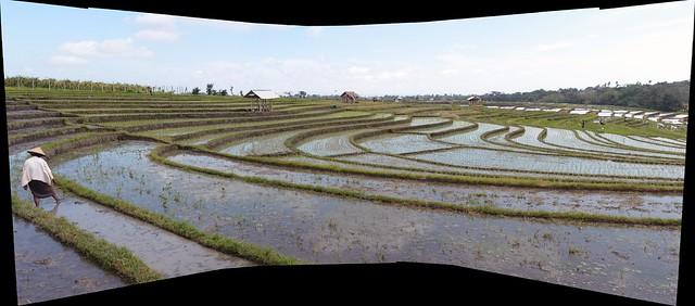 Panorama Traditional Terraced Rice Field - Bali Indonesia