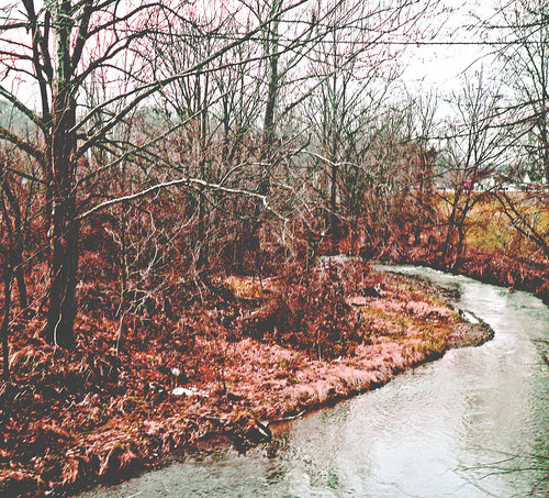 autumn leaves by a stream